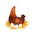 hen hatching eggs in nest over white background vector image
