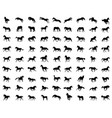 big set of horses silhouettes vector image vector image