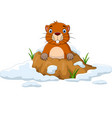 cartoon groundhog looking out hole vector image vector image