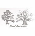 hand drawn high detailed trees for design vector image vector image
