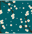 plum blossom flower on indigo blue background vector image vector image