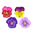 set of pansy vector image vector image