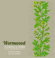 wormwood plant pattern on color background vector image vector image