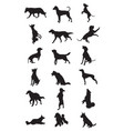dogs breeds silhouettes vector image vector image