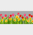 floral seasonal decor with daffodils and tulips vector image