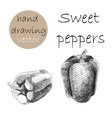 Hand Drawn sweet pepper Monochrome sketch vector image