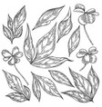 hand drawn peony and shamrock leaves set vector image