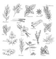 herbs and spices sketch icons vector image vector image