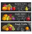 organic garden and tropical exotic fruits sketch vector image vector image