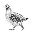 partridge bird sketch engraving vector image vector image