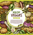 vegetables and veggie roots sketch vector image vector image