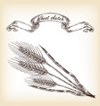 hand drawn wheat vector image
