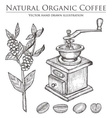Coffee Bean Grinder vector image