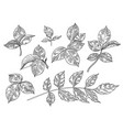 hand drawn monochrome leaves and branches set vector image vector image