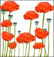 new poppy vector image vector image
