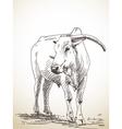 zebu cow vector image