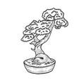 bonsai tree sketch engraving vector image vector image