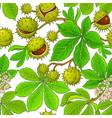 chestnut pattern on white background vector image vector image