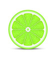 realistic lime slice vector image vector image