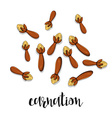 Carnation isolated object sketch Spice for food vector image