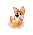 funny corgi lies on his back with bone in mouth vector image vector image