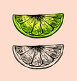 piece lime citrus fruit for making mojito vector image vector image