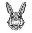 Rabbit or Bunny head isolated on white background vector image vector image