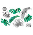 tropical leaf monstera palm monochrome set vector image