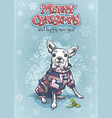 funny chihuahua in a warm jumpsuit vector image