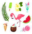 tropical summer time set exotic elements for vector image vector image