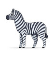 zebra animal standing on a white background vector image vector image