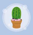cactus in pot design vector image