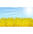 wheat fields vector image