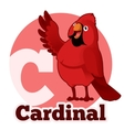 ABC Cartoon Cardinal vector image vector image
