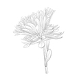 black and white aster flower isolated vector image vector image