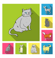 breeds of cats flat icons in set collection for vector image