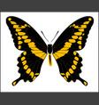 digital art giant swallowtail butterfly vector image vector image