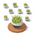 low poly potted grass vector image vector image