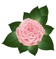 realistic camellia flower vector image