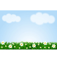 Landscape with grass and camomiles vector image