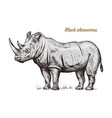 african rhinoceros wild animal on white background vector image