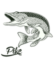 Jumping Pike isolated vector image