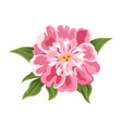 peony flower isolated on white vector image