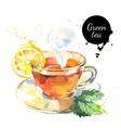 Watercolor hand drawn painted tea vector image vector image