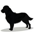 black retriever dog vector image vector image