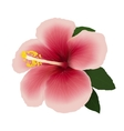 Hibiscus flower editable vector image
