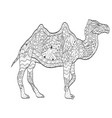 coloring camel animal for adults vector image vector image