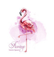 flamingo in watercolor isolated exotic vector image vector image