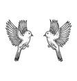 sparrow birds tattoo sketch engraving vector image vector image