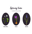 spring flowers set crocus muscari wood sorrel vector image vector image